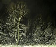 skognattsnowstorm Royaltyfri Foto