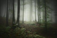 Skognatur med dimma Arkivfoto