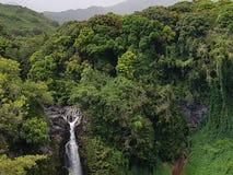 Skognedgångar arkivfoto