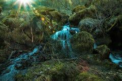 Skognedgångar Fotografering för Bildbyråer