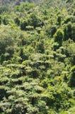 Skogområde Arkivbilder