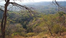Skogområde i Mumbai Indien royaltyfri bild