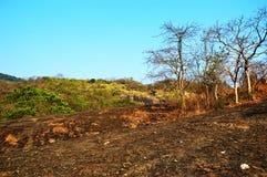 Skogområde i Mumbai Indien arkivfoto