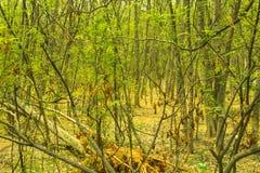 Skogområde med grönt frodigt Arkivbild
