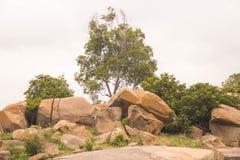 Skogområde med härlig bakgrund Arkivbilder