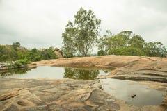 Skogområde med härlig bakgrund Royaltyfria Bilder