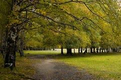 skogparadis royaltyfri fotografi