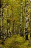 skogparadisbana royaltyfri fotografi