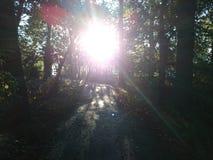 Skogpassage Fotografering för Bildbyråer