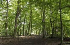 Skogpassage Arkivbilder