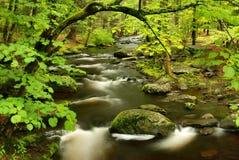 skogpennsylvania ström Royaltyfria Bilder