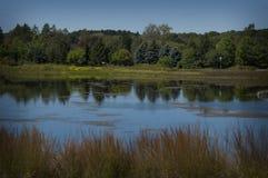 Skogplats för sen sommar med älskvärda dammreflexioner Arkivfoton