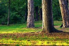 Skogplats i September Arkivfoton