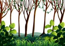 Skogplats med gröna träd royaltyfri illustrationer