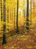 skogpoland roztocze Arkivfoton