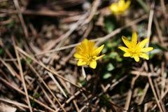 Skogram Fotografering för Bildbyråer