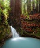 skogredwoodträdvattenfall Arkivbilder