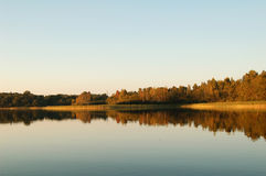 Skogreflexion i vatten Royaltyfri Fotografi