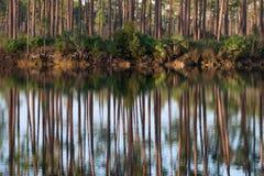 Skogreflexioner på långt sörjer den nyckel- sjön royaltyfria foton