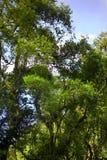 skogregn fotografering för bildbyråer