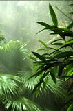 skogregn Arkivfoto