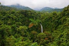 skogregn Royaltyfria Bilder