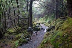 skogregntrail Royaltyfria Bilder