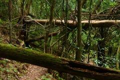 skogregntrail arkivbild