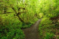 skogregntrail Arkivfoto