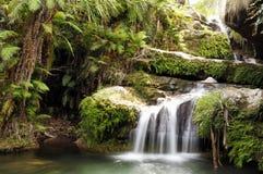 skogregnvattenfall Royaltyfria Bilder