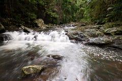 skogregnvattenfall Fotografering för Bildbyråer