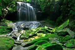 skogregnvattenfall Arkivfoton