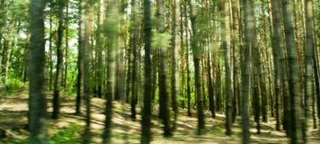 skogrunning arkivbilder