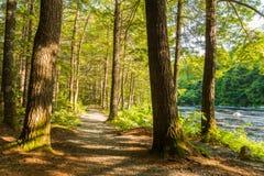skogrussia för höst tidig trail Arkivfoto