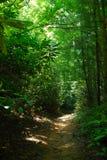 skogrussia för höst tidig trail Royaltyfria Foton