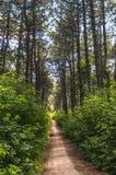 skogrussia för höst tidig trail Fotografering för Bildbyråer