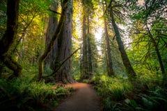 skogrussia för höst tidig trail Royaltyfri Foto