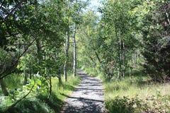 skogrussia för höst tidig trail Royaltyfri Bild