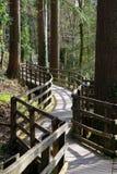 skogrussia för höst tidig trail Arkivbilder