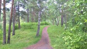 skogrussia för höst tidig trail Arkivbild