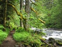 Skogs- bana vid floden Royaltyfri Bild