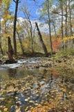 Skogs- flod 20 för höst royaltyfri bild