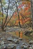 Skogs- flod 8 för höst arkivfoton
