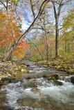 Skogs- flod 21 för höst royaltyfri bild