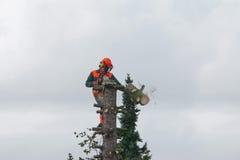 Skogsarbetare Cutting ett träd royaltyfri foto