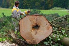 Skogsarbetare i mest forrest Arkivfoto