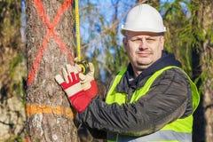 Skogsarbetare med en måttband nära granen Arkivfoton
