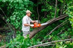 Skogsarbetaren använder hans chainsaw klippte trädet Arkivfoton