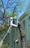 Skogsarbetaren arbetar i höjd fotografering för bildbyråer