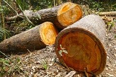 Skogsavverkning Fotografering för Bildbyråer